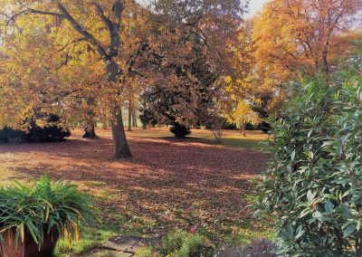 Park-Herbst